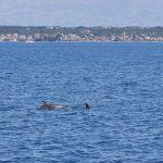 freediving croatia dolphin