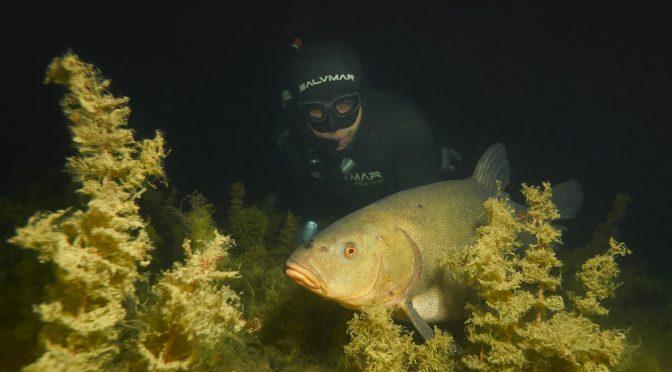 Freediving Milada