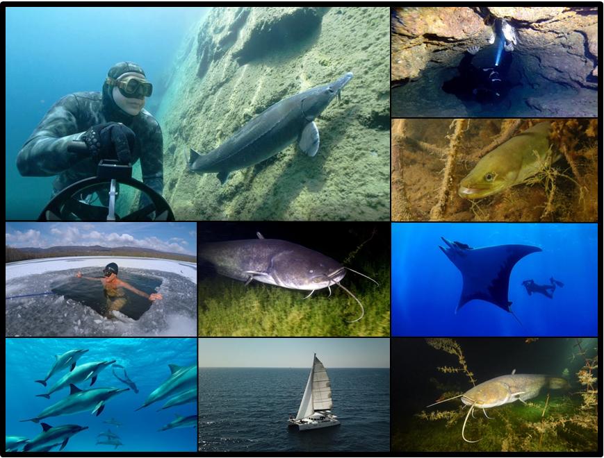 top10 freediving videos