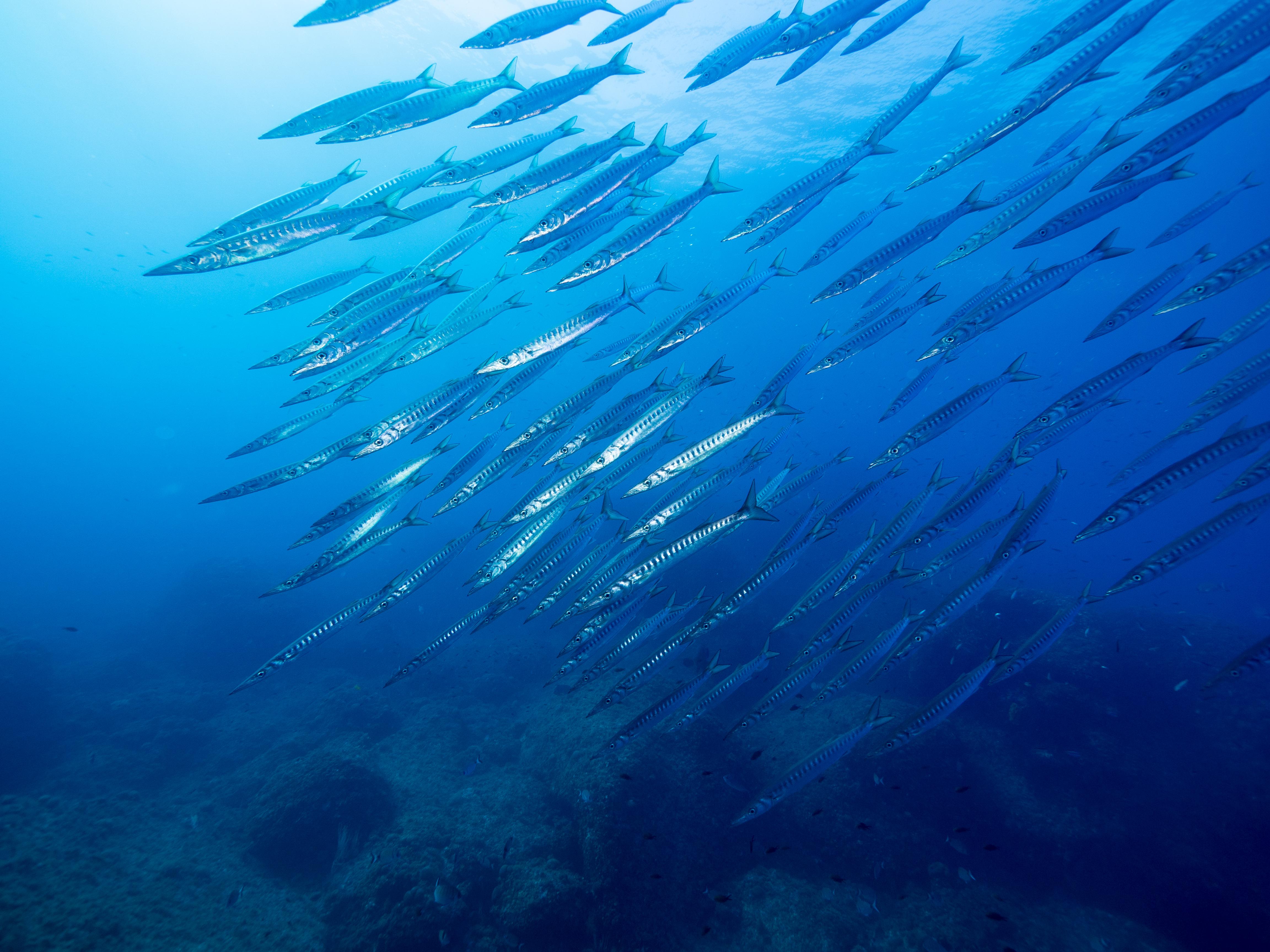 Illes Medes / Medes Islands - Freediving, Snorkeling, La Sirena, Apnea