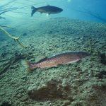 Freediving Veľké Košariská Dive