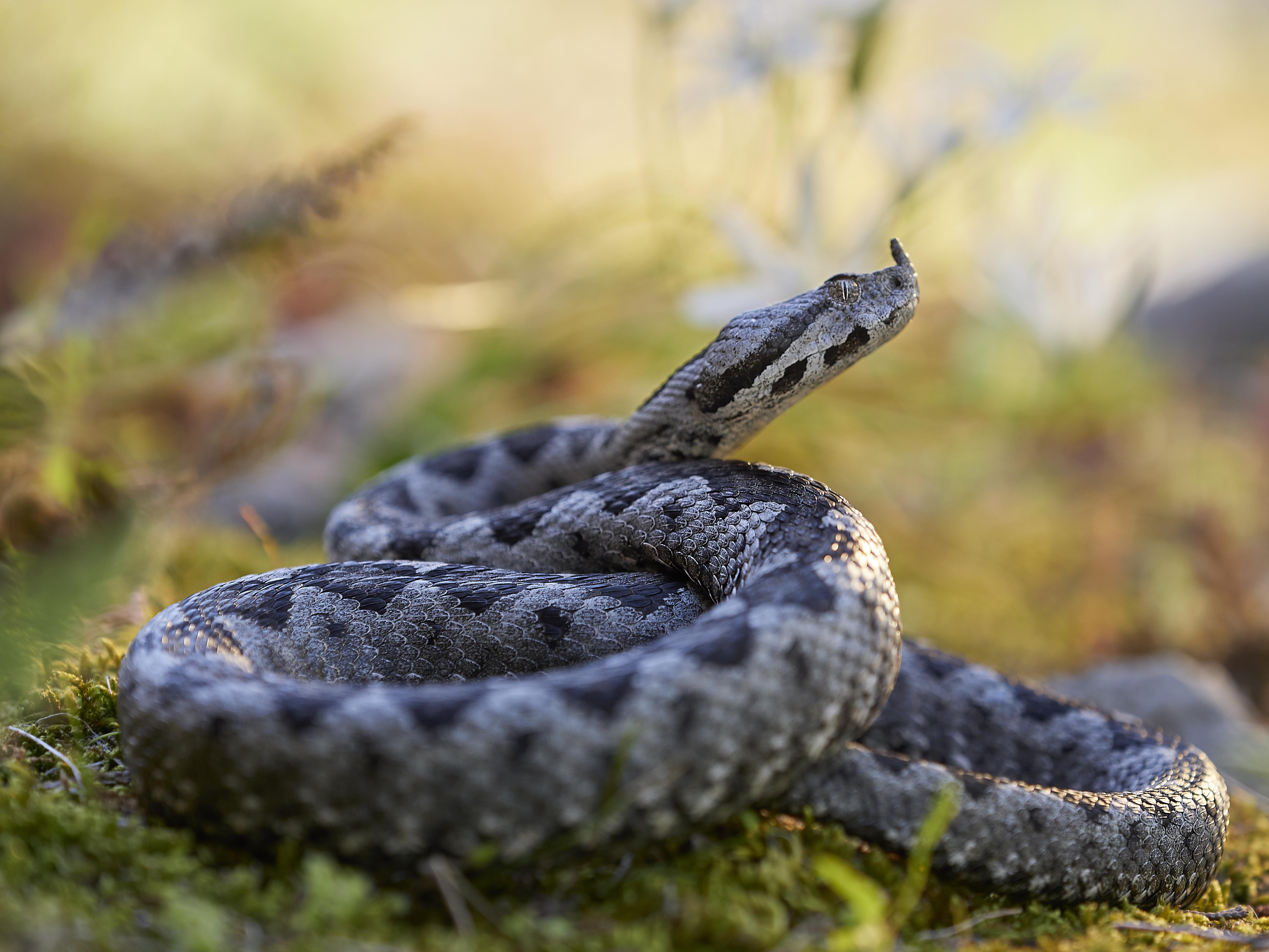 Bacina lakes – Snakes + Freediving 2019