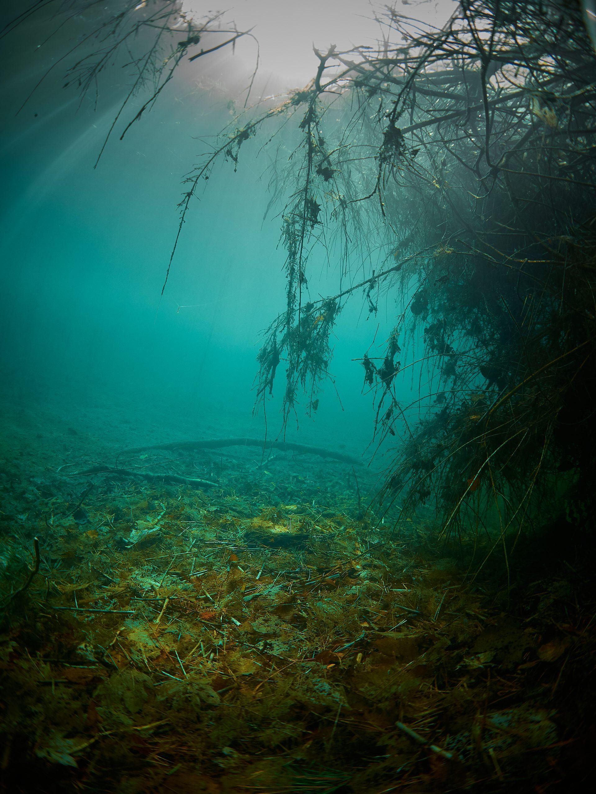 Mlýnský rybník freediving diving freshwater