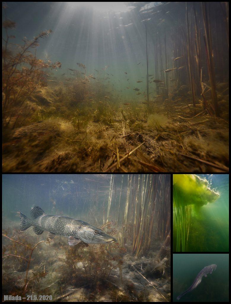 Milada underwater freshwater freediving