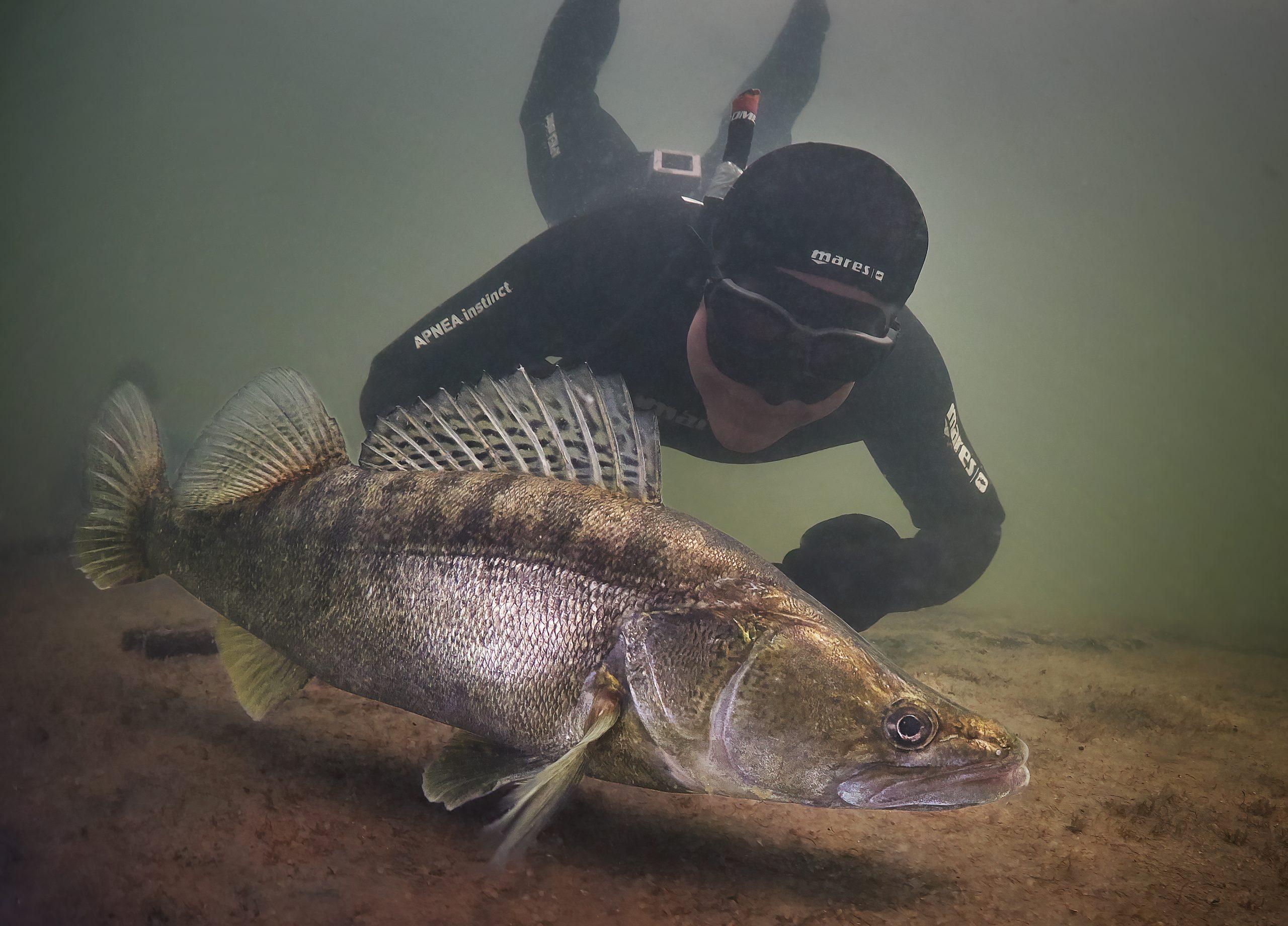 Žernosecké jezero Labe potápění freediving Labe
