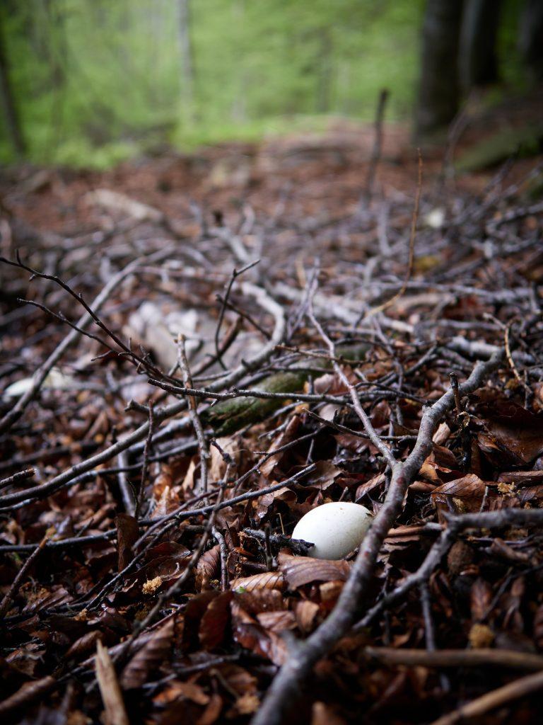 čap černý ciconia nigra CHKO LAbské pískovce