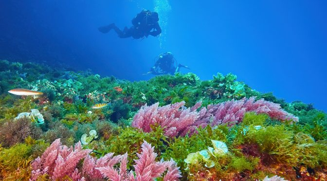 Lastovo Diving freediving