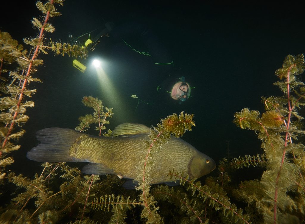 Milada apnea weekned apneaman freediving noční