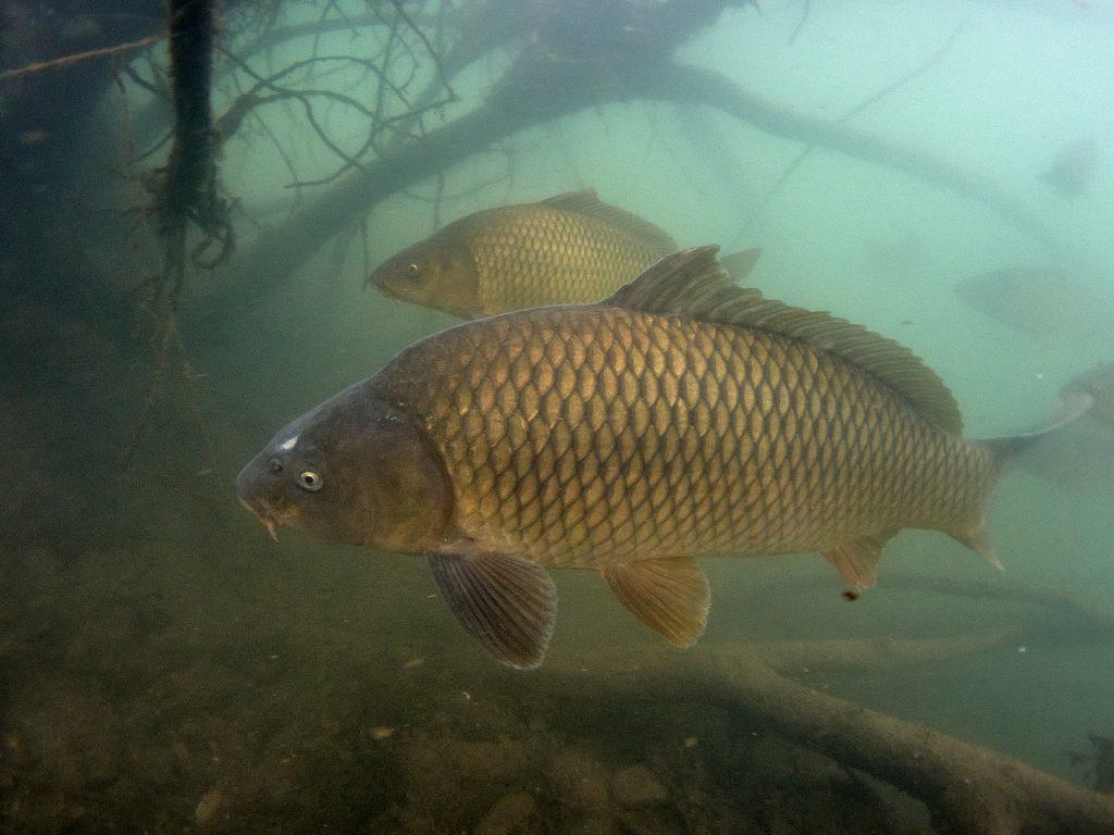 Olympus TG-6 jezero Barbora