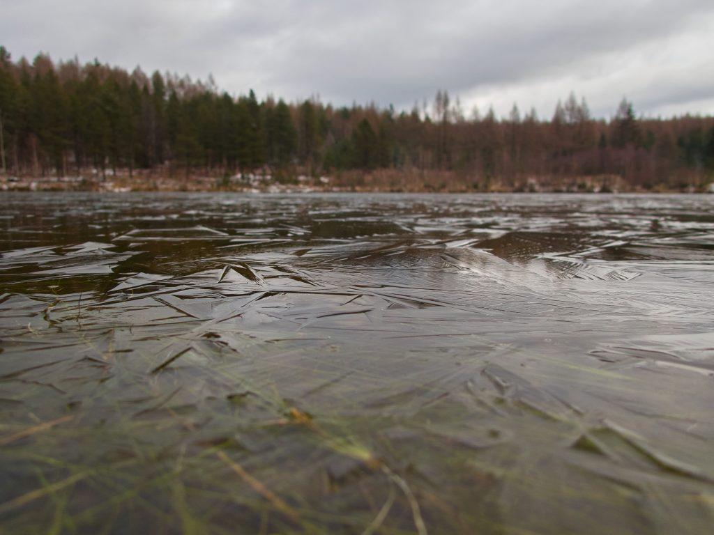 Liščí rybník / Hrádecký rybník