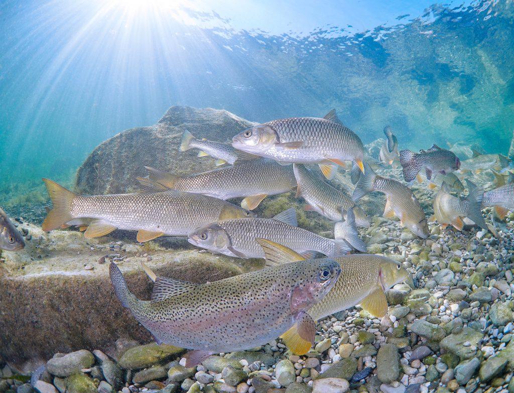 Austria freediving river freshwater