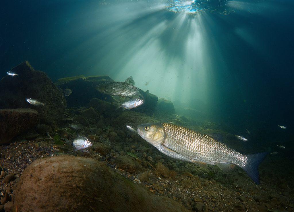Austira freediving river freshwater