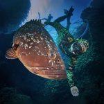 Illes Medes freediving grouper