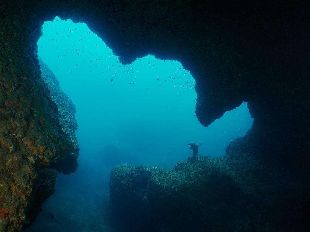 Illes Medes cave freediving dofi